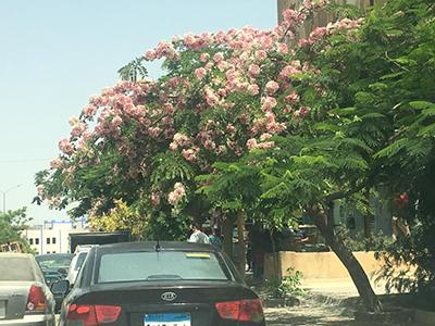 Egypt_flower_10.jpg