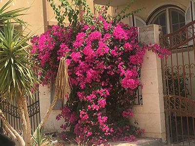 Egypt_flower_11.jpg