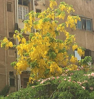 Egypt_flower_12.jpg