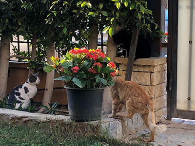 Egypt_flower_16.jpg
