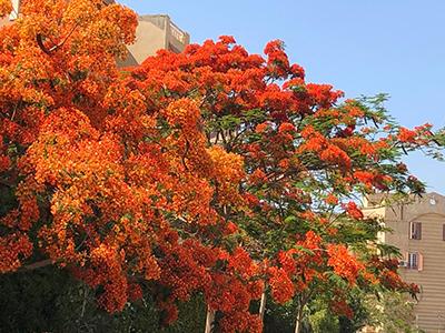 Egypt_frametree_18.jpg