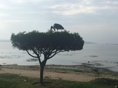 Entebbe_02.jpg