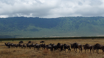 Ngorongoro_P7061414_400.jpg