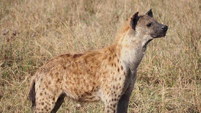 Serengeti_P7040877_400.jpg