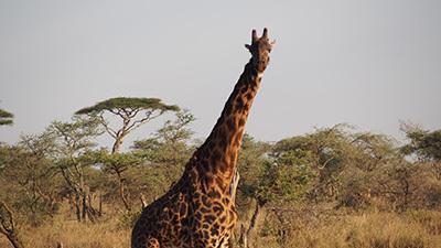 Serengeti_P7040907_400.jpg