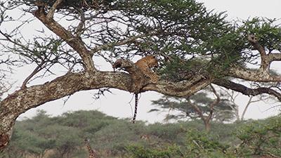 Serengeti_P7040922_400.jpg
