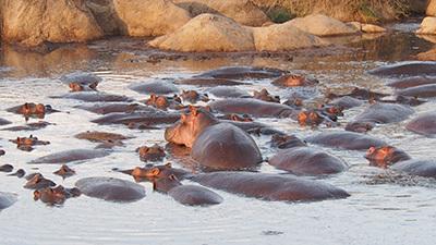 Serengeti_P7040933_400.jpg