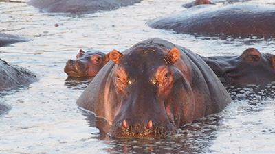 Serengeti_P7040936_400.jpg