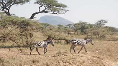 Serengeti_P7050991_400.jpg