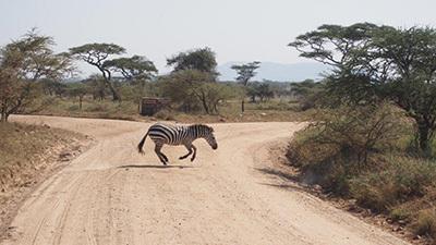 Serengeti_P7050993_400.jpg