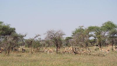 Serengeti_P7051019_400.jpg