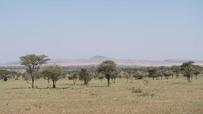 Serengeti_P7051023_400.jpg
