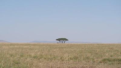 Serengeti_P7051027_400.jpg