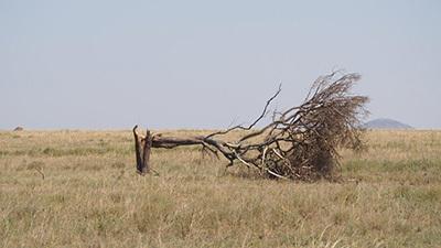 Serengeti_P7051031_400.jpg