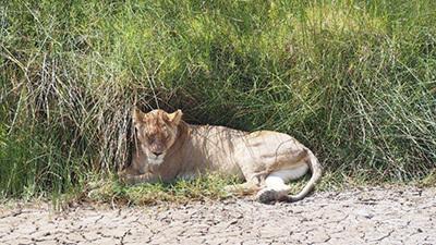 Serengeti_P7051034_400.jpg