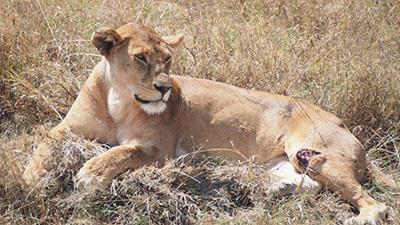 Serengeti_P7051050_400.jpg