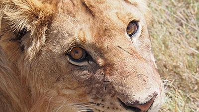 Serengeti_P7051061_400.jpg