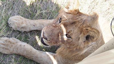 Serengeti_P7051065_400.jpg