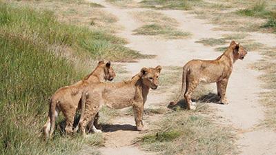 Serengeti_P7051126_400.jpg