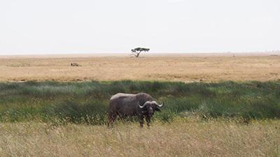 Serengeti_P7051129_400.jpg