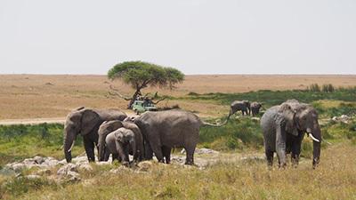 Serengeti_P7051151_400.jpg