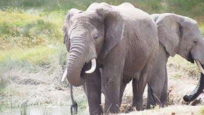 Serengeti_P7051200_400.jpg