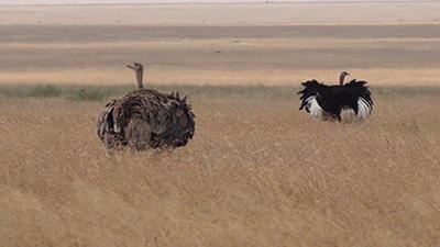 Serengeti_P7051227_400.jpg