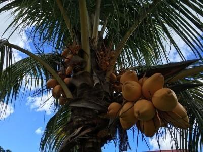 Seychelles08_06.jpg