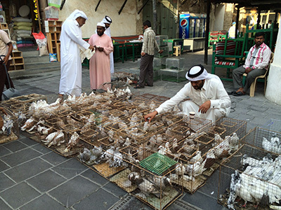 qatar15_IMG_1640_400.jpg